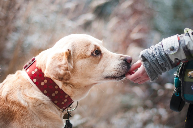 Companion Animals and Alzheimer's Disease